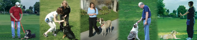 Training Services                                       | Patti Reichel, Canine Homeschooling and Obedience Glen Ellyn IL